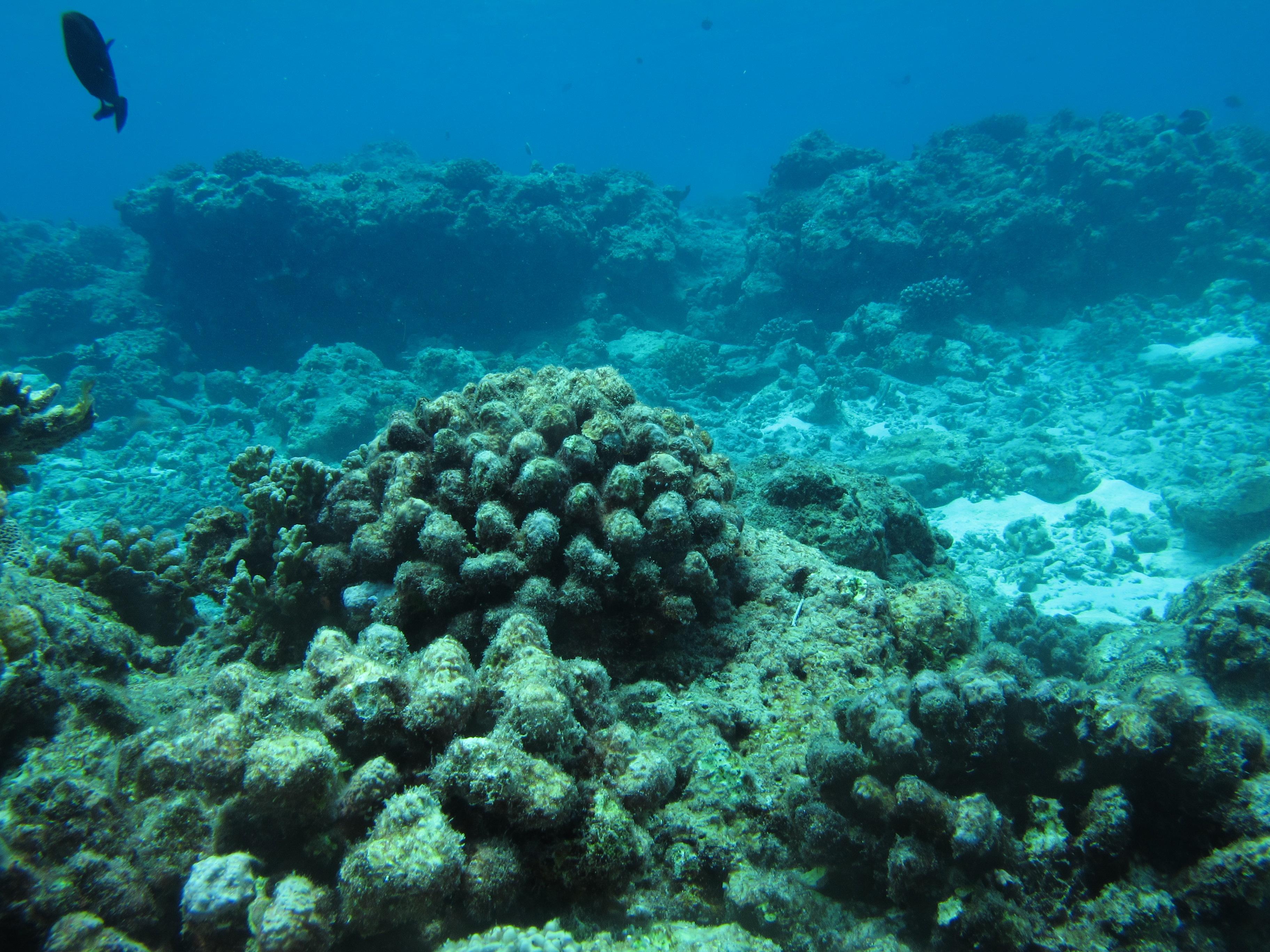 Underwater oyster reef - photo#5