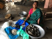 Near Pichavaram, Coastal Tamil Nadu. While reporting on sharp declines in TN's marine fish catch. https://scroll.in/article/808960/why-tamil-nadus-fisherfolk-can-no-longer-find-fish